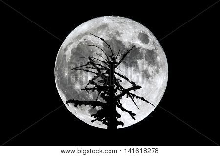 Full Moon Dead Tree Silhouette