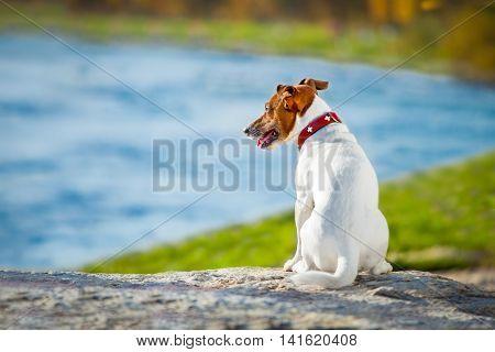 Dog Thinking And Watching