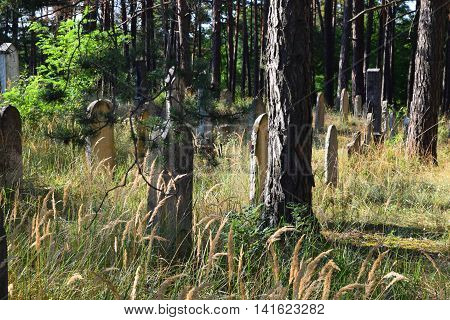 Old Jewish Cemetery, Old Cemetery in the forest