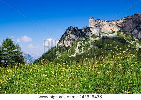 Meadow flowers with mountain range and blue sky in the background. Austrian Alps Tyrol.