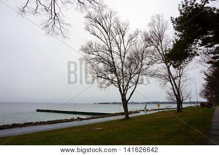 A white birch tree (Betula papyrifera) grows near the lakefront in Wequetonsing, Michigan.