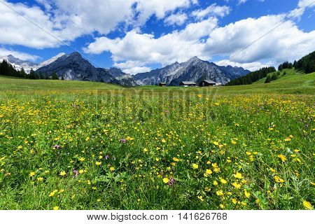 Fantastic alpine landscape with bright meadow flowers under blue sky