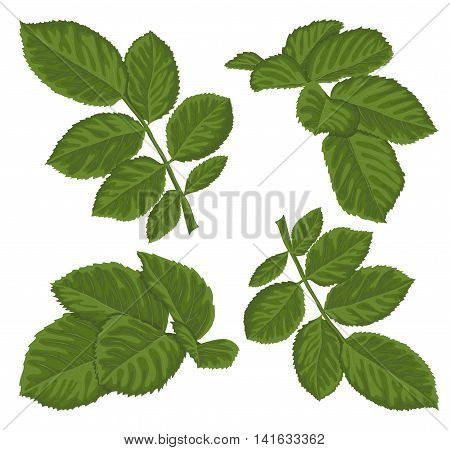 set of beautiful green leaves isolated on white. Hand-drawn with effect of drawing in watercolor