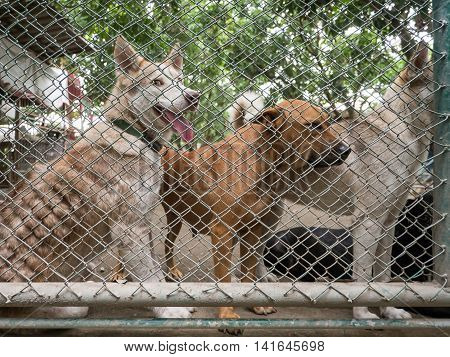 Stray Dog Behind Cage  In Foundation