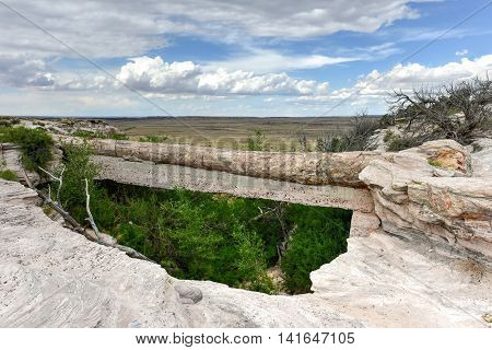 Agate Bridge - Petrified Forest National Park