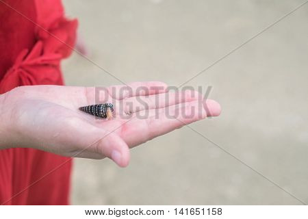 small hermit crab in a hand of kid