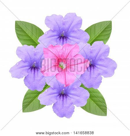 beautiful Petunia hybrida flower on white background