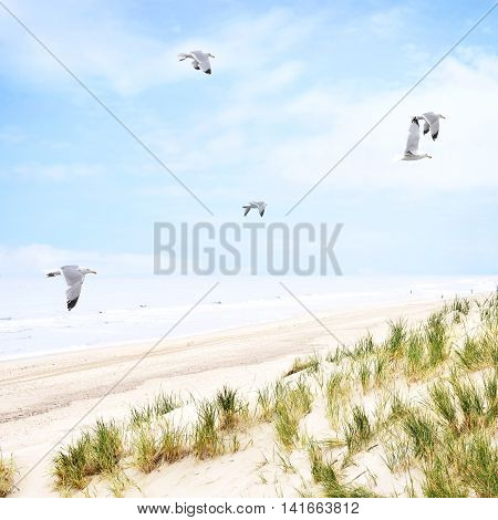 Beach dunes with flying seagulls and view to the sea. Long beach with sand dunes and blue cloudy sky.