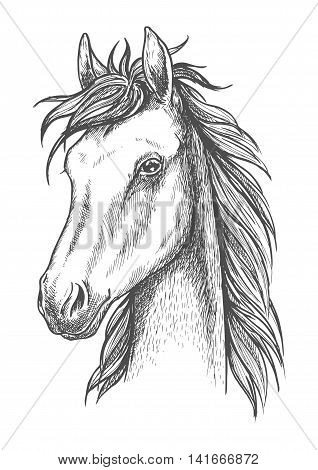 Sketched horse head icon of arabian stallion. Equestrian sporting competition or t-shirt print design