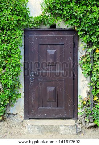 Old medieval wooden door overgrown with green ivy.