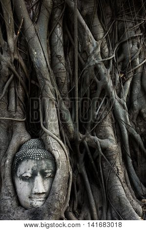 the sandstone head is entrapped in the roots and lies beneath a Bodhi tree in the vicinity of Wat Mahathat in Ayutthaya.