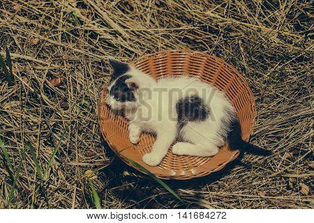 Cute Kitten Pet