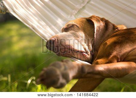Dog sleeping in the peaceful garden in hammock
