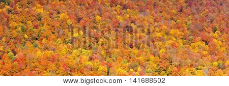 Colorful foliage abstract background panorama in White Mountain, New Hampshire.