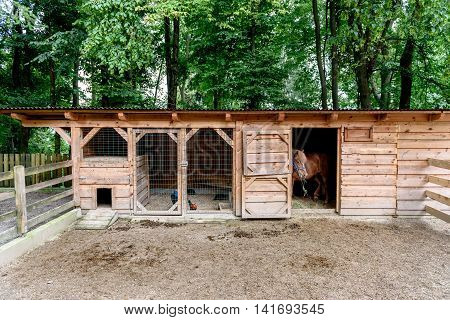 Mini ZOO with home stables barn horses and chicken. Miniature petting ZOO in nature.