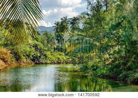 Coconut palm trees and casuarinaceae trees growing along the small river blue sky and bright tropics of Thailand