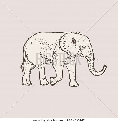 Realistic illustration of an elephant a figure similar to the engraving of clean vector lines. An elephant in full growth.