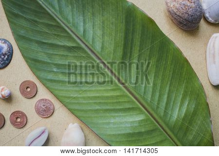Banana leaf shells and coins on the table. Flat photo background on beige craft paper. Summer tropical backdrop. Horizontal image for wedding invitation birthday decor Exotic nature overview.