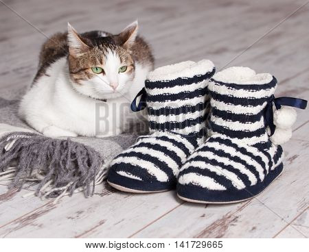 Warm slippers, rug and cat on the background old white floor. Homeliness.