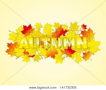 Autumn maple leaves on a yellow background.