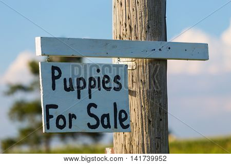 Paradise PA - August 6 2016: A Puppies For Sale sign at a farm in rural Lancaster County road.