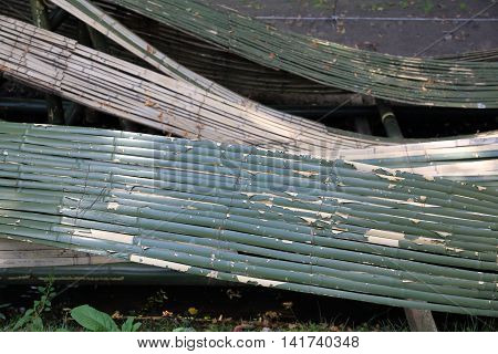 The Curved Bamboo Bark