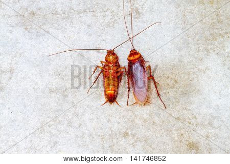 cockroach lay together on concrete floor .