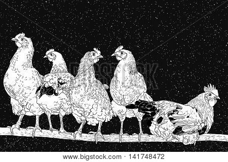 Chickens on perch. Flock of poultry under night starry sky. Each star is unique and painted by hand. Black and white graphic vector illustration