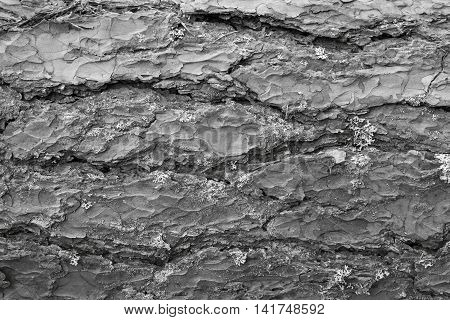 wooden texture of bark of a pine of gray color closeup for an abstract natural background