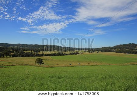Rural background. Green meadow. Scene near Wauchope New South Wales.