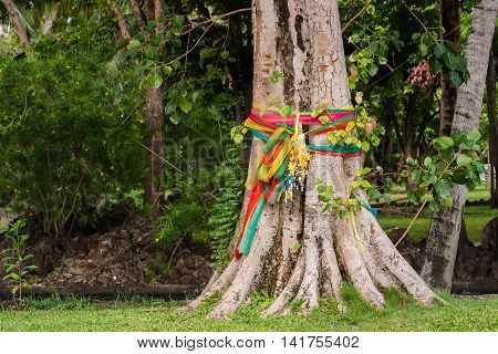 Holly Bodhi Tree and three colored fabric tied