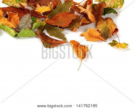 Autumn Dried Leafs Isolated On White Background