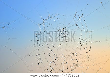 Spider web with rain drops in summer