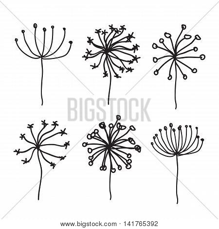 Dandelion Fluffy Seeds Flowers hand drawn eps 10