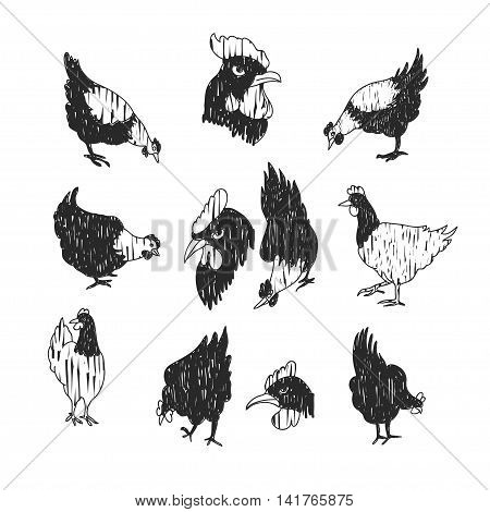 Vector doodle chicken icon set. Isolated black textured chicken icon for logo web site design app UI. Doodle animal illustration for posters cards book cover flyers banner web game designs.