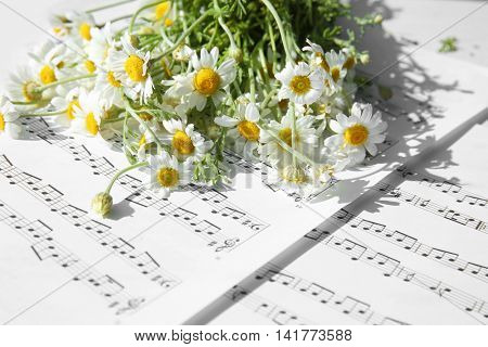 Chamomile bouquet on music notes