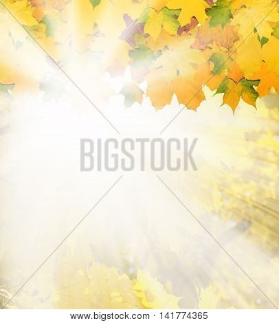 the Beautiful autumn background with maple leaves