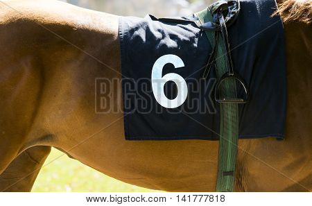 Horse Racing, Close Up On Brown Horse With Number 6