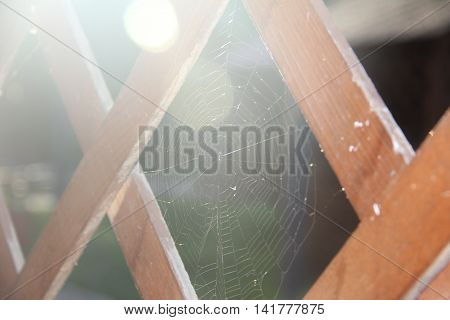 cobweb close up in the scattered light between wooden planks on a background of grass and tree
