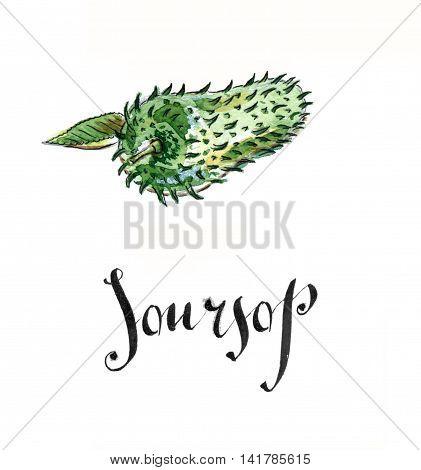 Soursop prickly custard apple hand drawn - watercolor Illustration