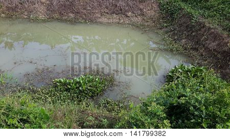 farm irrigation pond with greenish water and plants and vines growing on muddy banks, Songkhla, Thailand