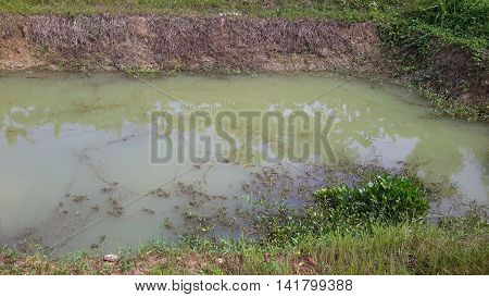 irrigation farm pond with greenish water, water plants and vines along the bank, Songkhla, Thailand