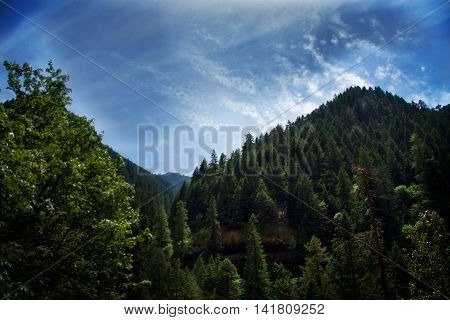 Blue sky soaring over pine trees on a mountain
