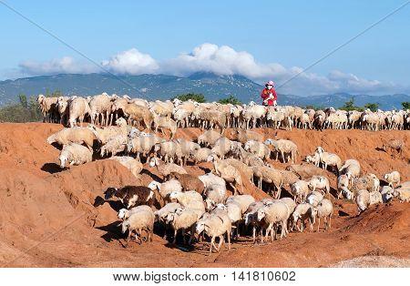 Ninh Thuan, Vietnam, June 26, 2016 Farmers, rural tỉnh of Ninh Thuan, Vietnam, raising Goats