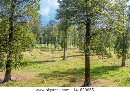 forest trees in day light