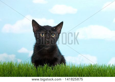 black kitten with yellow eyes in tall green grass crouched down looking forward to viewers right blue background sky with clouds. mouth open as if talking. copy space