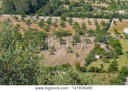 Agricultural area with olive grove in Majorca Spain