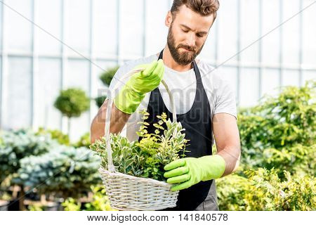 Portrait of a handsome gardener in apron with a basket full of plants in the greenhouse. Plant seller taking care of flowers in the shop