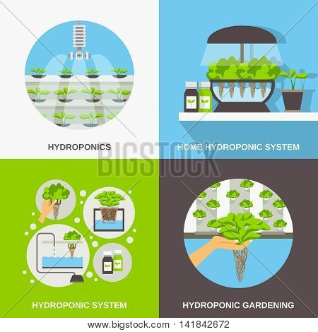 Color flat composition 2x2 depicting hydroponic system gardering vector illustration