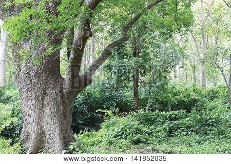 Tropical Rainforest Jungle In Thailand